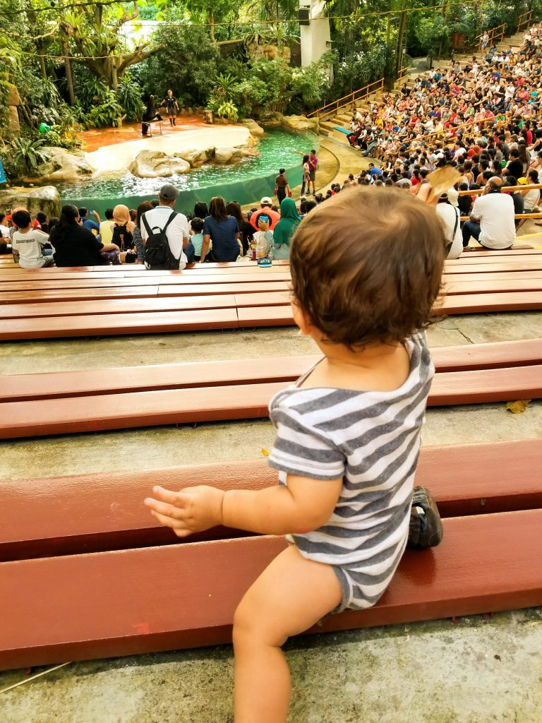 Baby watching a show at Singapore Zoo