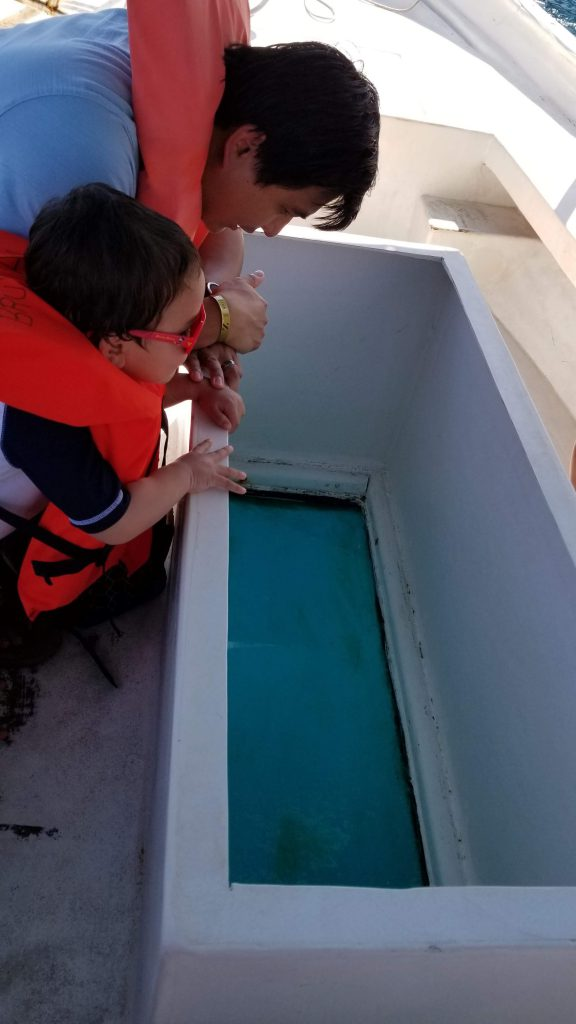 Man and boy looking through the bottom of a glass-bottom boat