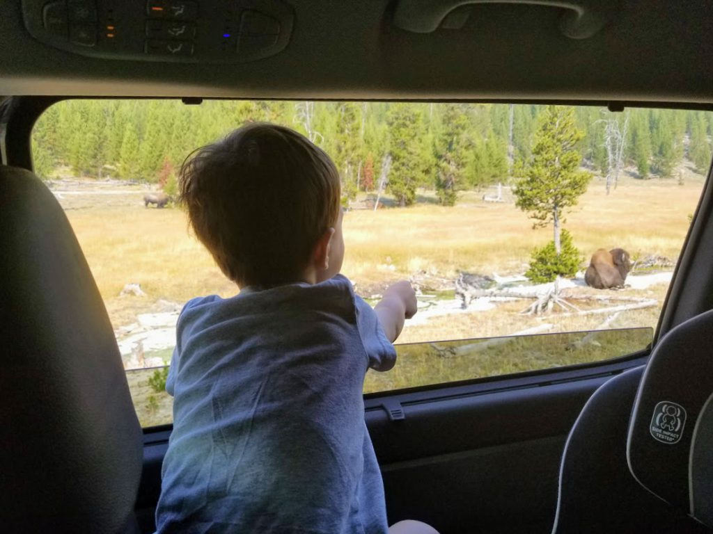 Child pointing at bison- Yellowstone with kids